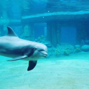 Oh hey Checking out the new dolphin habitat dolphins marinelifehellip
