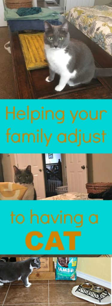 How to help your family adjust to having a cat|Ripped Jeans and Bifocals