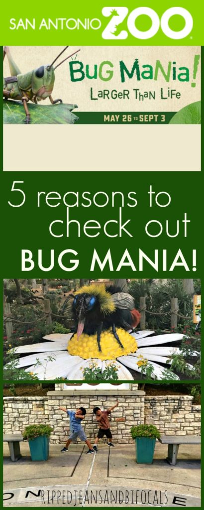 5 reasons to check out Bug Mania at the San Antonio Zoo|Ripped Jeans and Bifocals