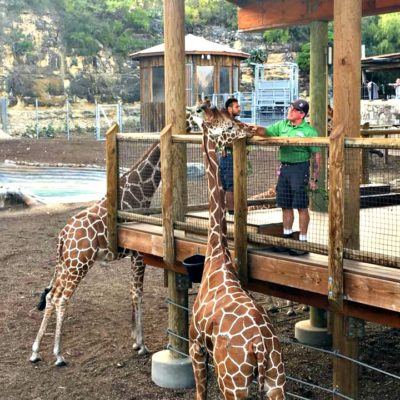 Beastly Breakfast at the San Antonio Zoo