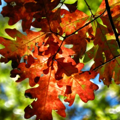 Two Yummy Essential Oil Diffuser Blends for Fall