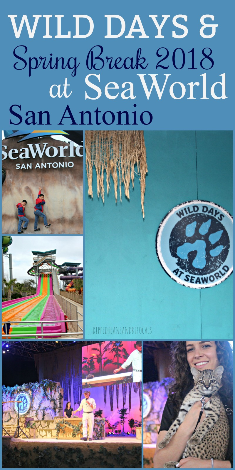 Visit SeaWorld San Antonio during spring break 2018