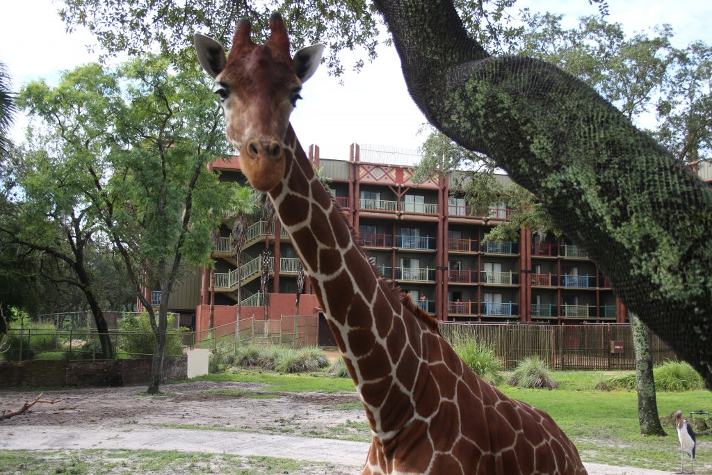Everything you need to know about the Senses of Africa Breakfast at Disney's Animal Kingdom Lodge|Ripped Jeans and Bifocals