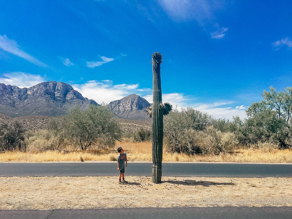Best places to stop on a southwest road trip|Arizona travel: boy looking up at giant cactus