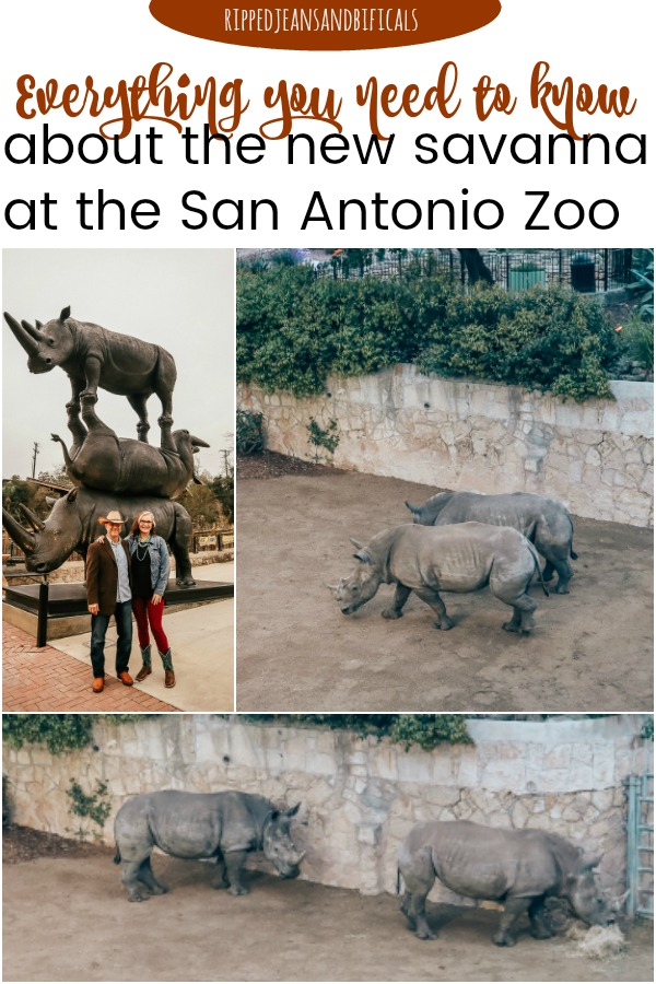 The San Antonio Zoo welcomes two new rhinos