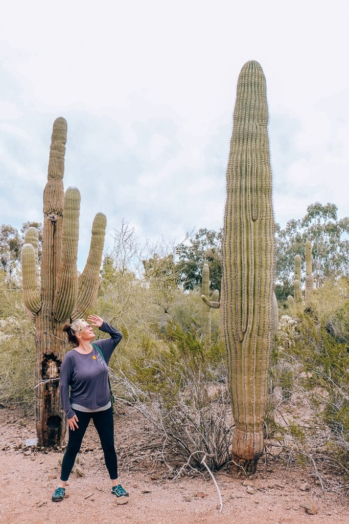 The Complete Guide to Tempe with Kids|Woman standing next to giant cactus in Tempe AZ