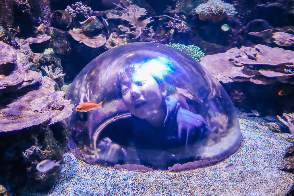 The Complete Guide to Tempe with Kids|Child at SEA LIFE Center in Tempe AZ