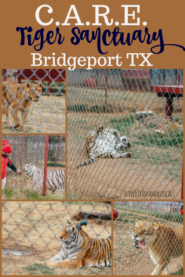 Visiting CARE Tiger Sanctuary in Bridgeport Texas