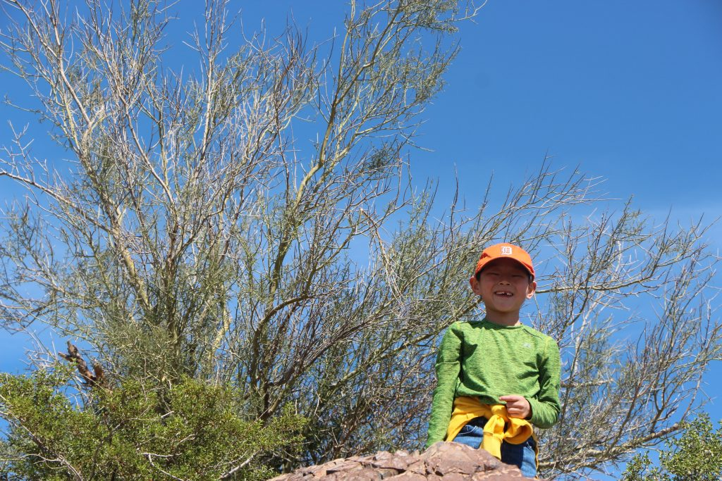 Tips for hiking Hayden Butte in Tempe Arizona include taking plenty of water