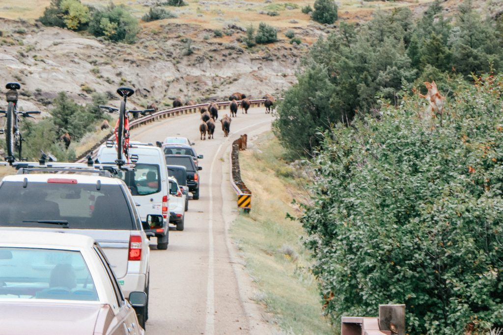 Things to do in Medora North Dakota - obviously the Theodore Roosevelt National Park is a don't miss.