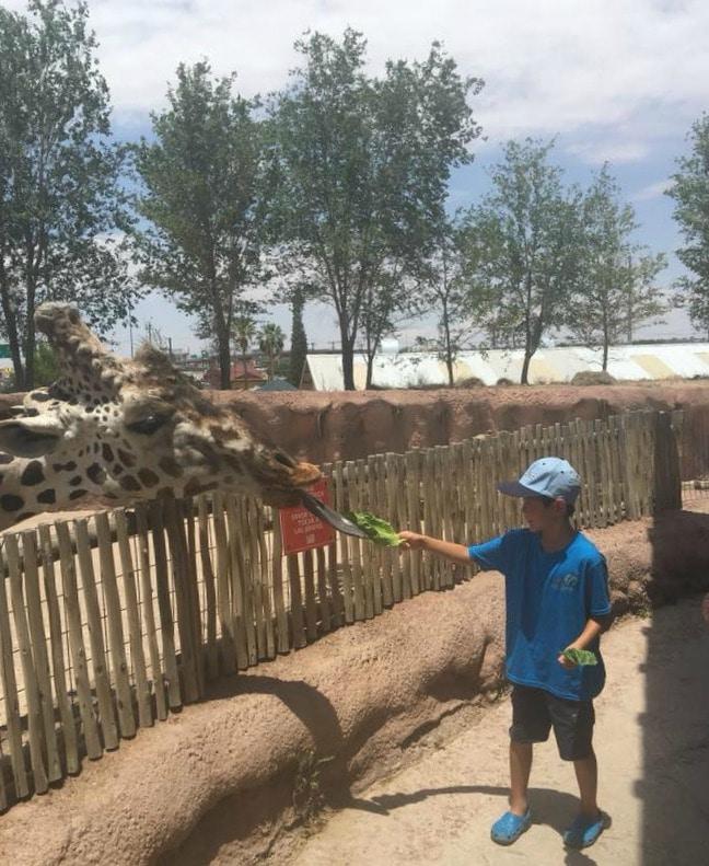 Things to do in El Paso Texas - El Paso Zoo