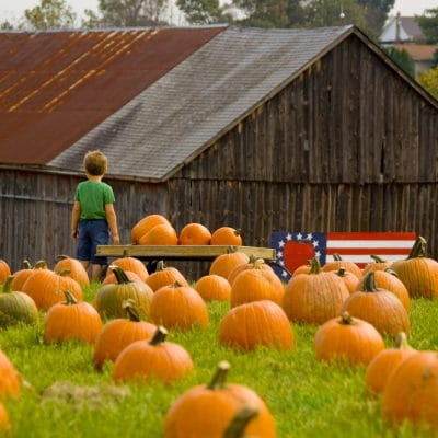 Pumpkin Patches in San Antonio in 2020
