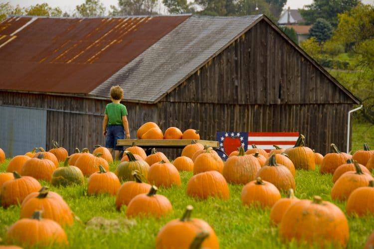 child in pumpkin patch in san antonio