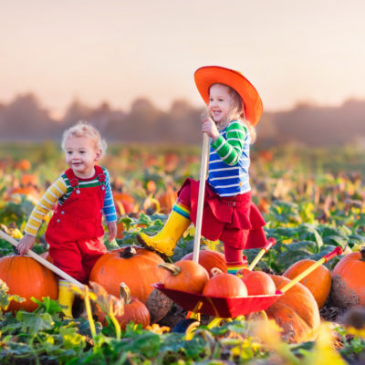 Pumpkin Patches in San Antonio in 2021