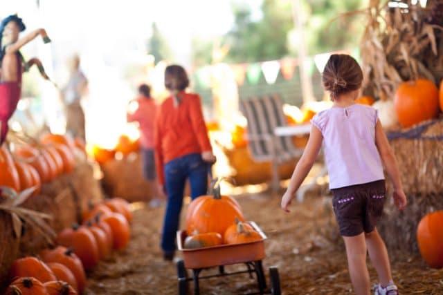 Kids pulling wagon in pumpkin patch in San Antonio