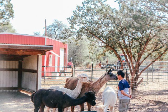 Boy with Llana at Wasserman Wranch West Texas