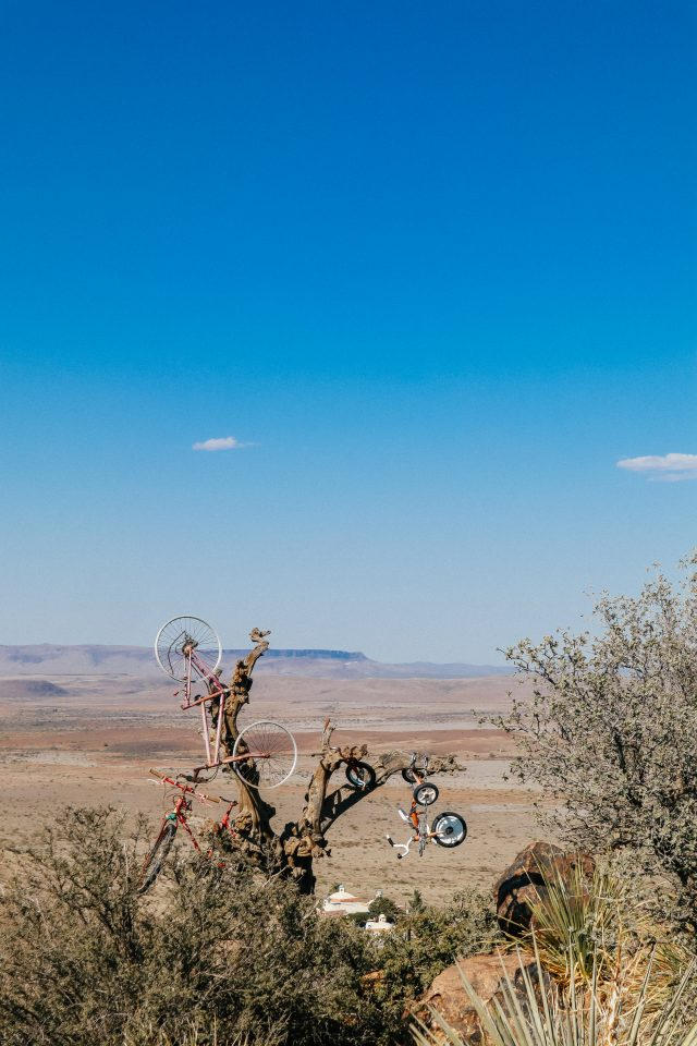 Bicycle tree at Hancock Hill in Alpine TX