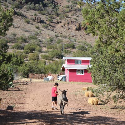 Wassermann Wranch – A place for the animal lover in Alpine Texas